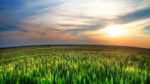 Green Field Blue Sky Sunset HD
