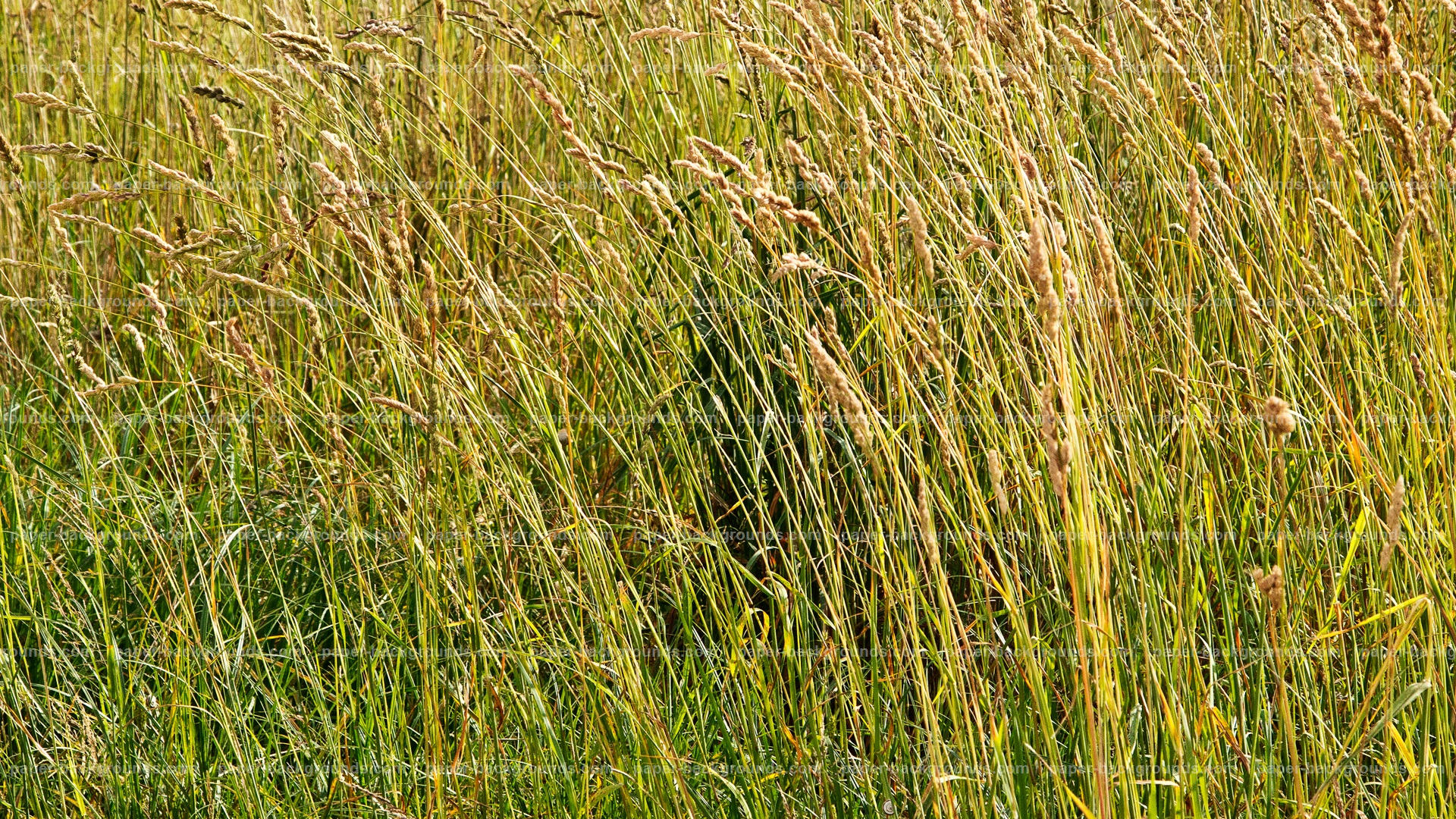 Green Grass Texture HD