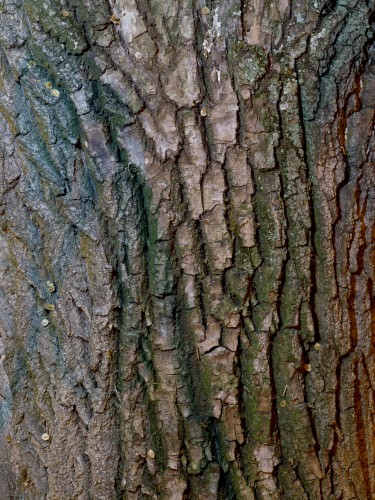 Tree Bark Texture HD