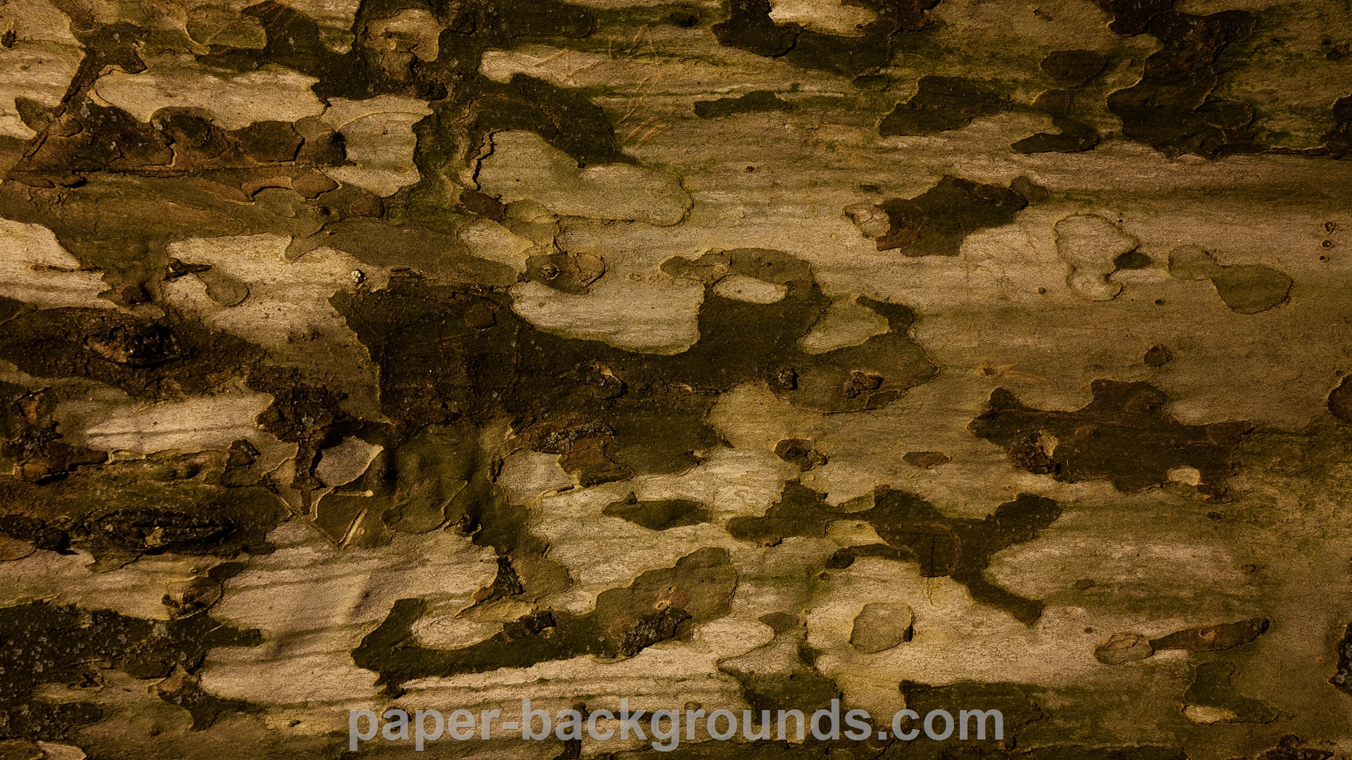 Aged Tree Bark Texture HD