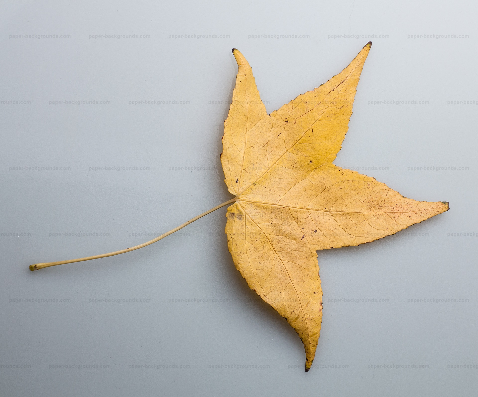 Dry Yellow Leaf Photo HD