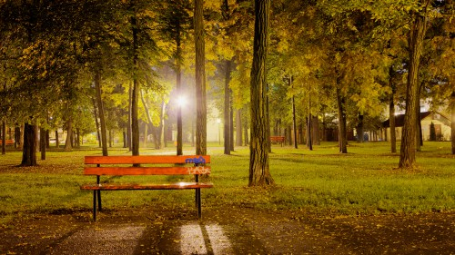 Bench And Trees At Night HD 1920 x 1080p