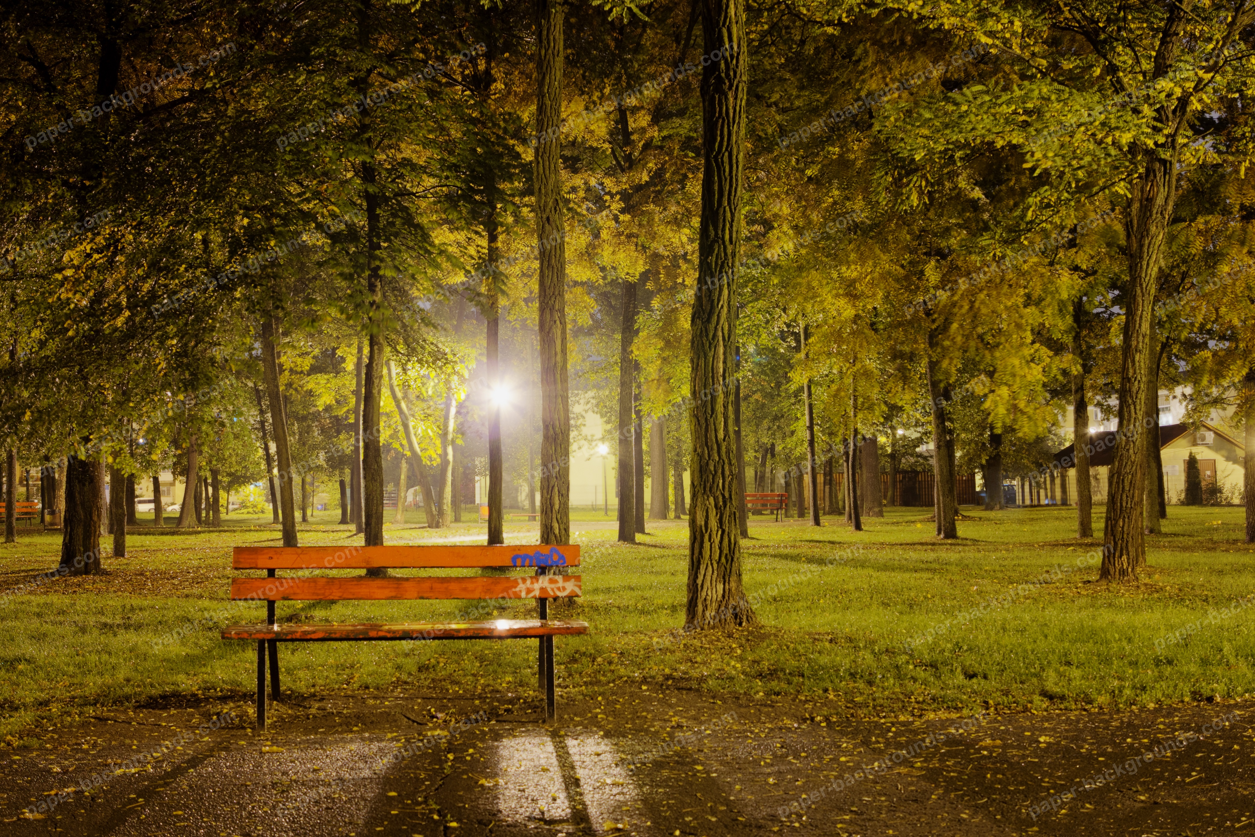 Bench And Trees At Night