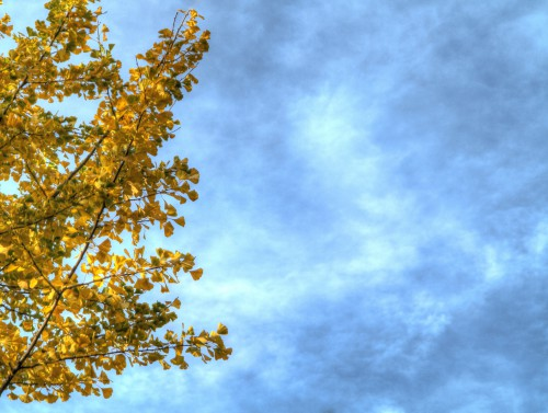 Autumn Branches With Leaves Sky Background, High Resolution