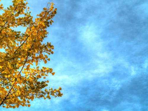 Autumn Branches With Leaves Sky Background HD 1920 x 1080p