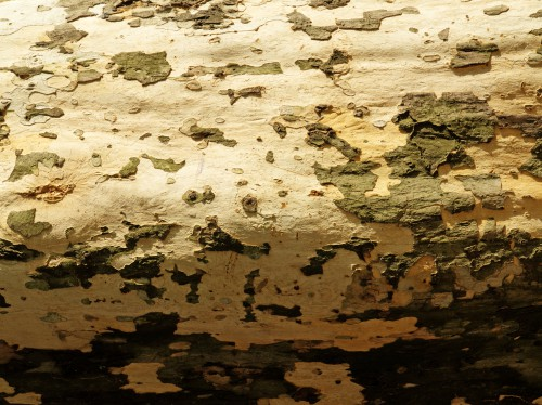 Old Wood Tree Bark Texture, High Resolution